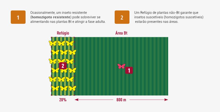 areas-refugio-1-2